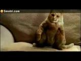 Кот танцует под майкла джексона