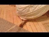 Глория (Абиссинская кошка)